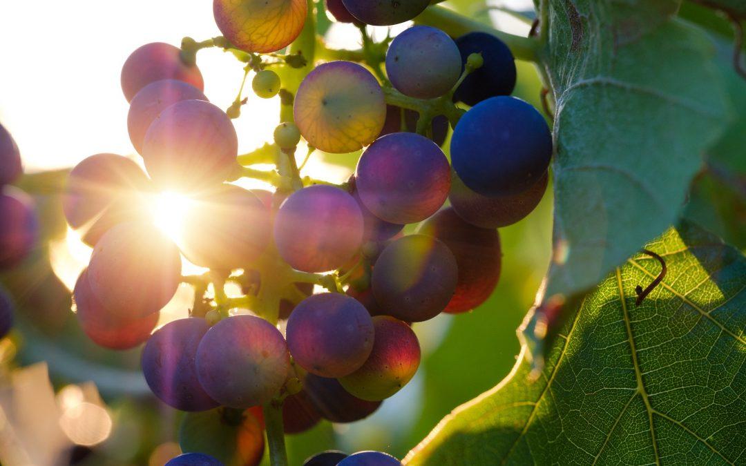 Pleine conscience alimentaire : 7 principes à appliquer